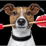 hund veterinar