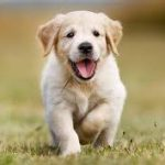 glad hundvalp