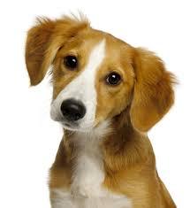 Rekommenderade hundförsäkringar