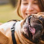 hundar lycka lyckliga ägare
