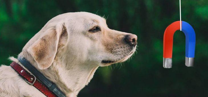 Hundar känner av jordens magnetfält