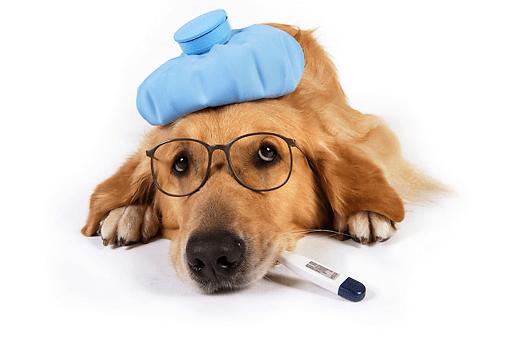 Vanliga hundsjukdomar