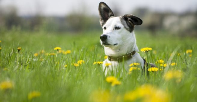 ID-märkt hund – Försäkringar kan göra skillnad